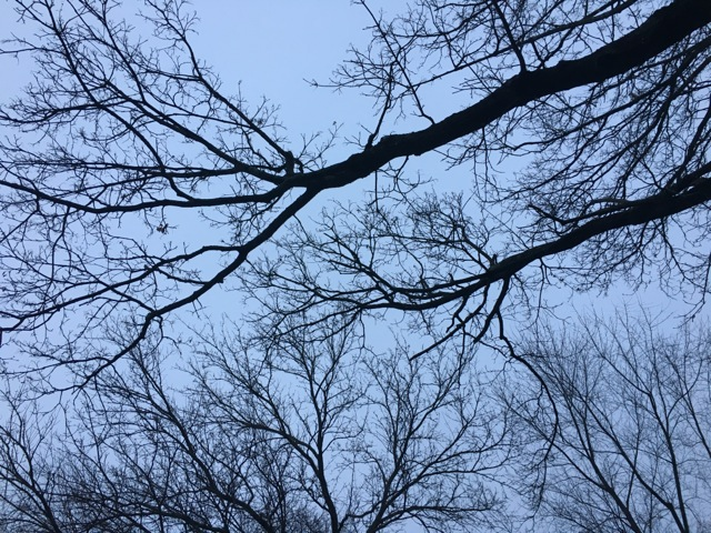 Two Tree limbs reaching into the sky like arms