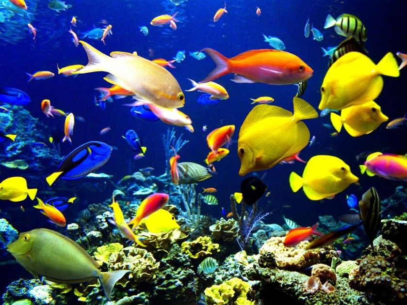 colourful-school-of-fish